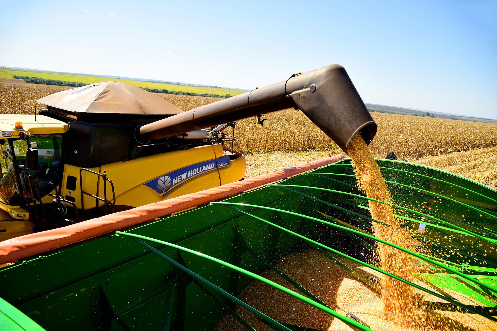 Produção de milho em Santa Catarina deve crescer 10%