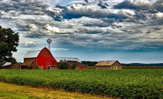 Safra de soja dos Estados Unidos: 5 fatos que você precisa saber