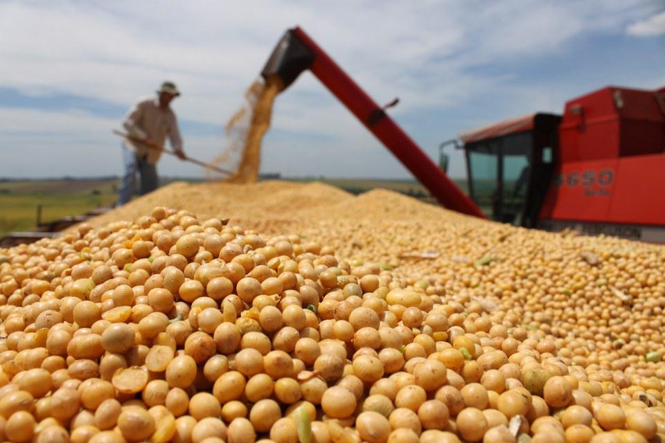Preço da soja chega a R$ 106 por saca no Brasil, aponta Safras