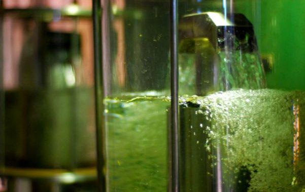 etanol, Biocombustível