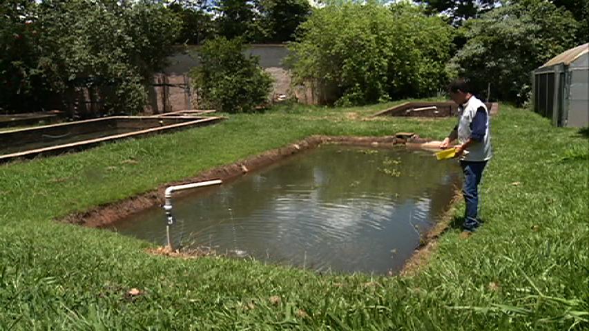 Viveiro escavado para criação de tilápias