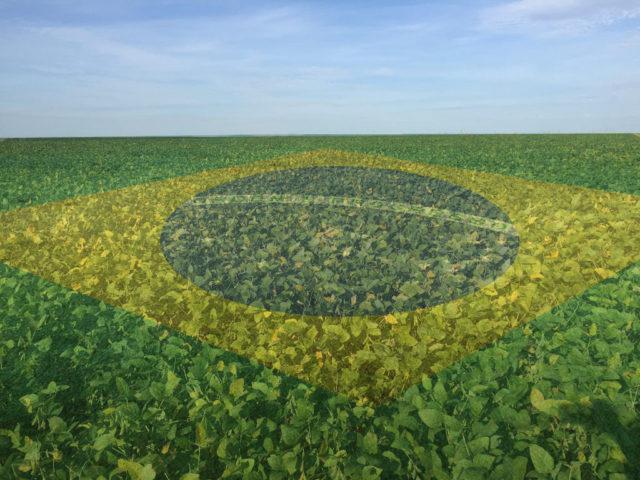 Brazilian agribusiness