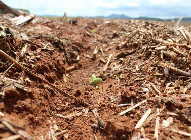 SOJA: PARANÁ CORRE CONTRA O TEMPO PARA COMEÇAR PLANTIO MAS CLIMA DEVE AJUDAR.