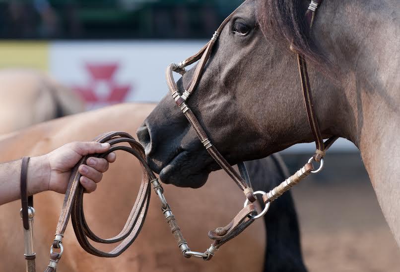 freio de ouro, cavalo crioulo
