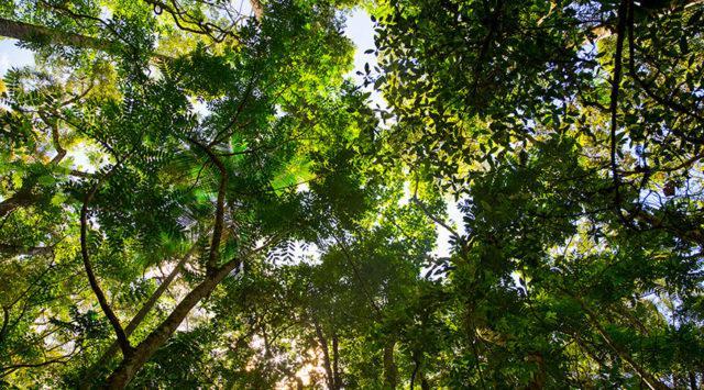 meio ambiente, CAR, cadastro ambiental rural, floresta, árvore, aquecimento global, preservação, licenciamento ambiental, PRA, cotas ambientais, licenciamento ambiental