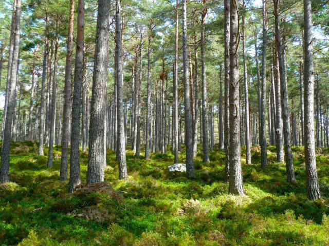 Código Florestal, floresta, árvores