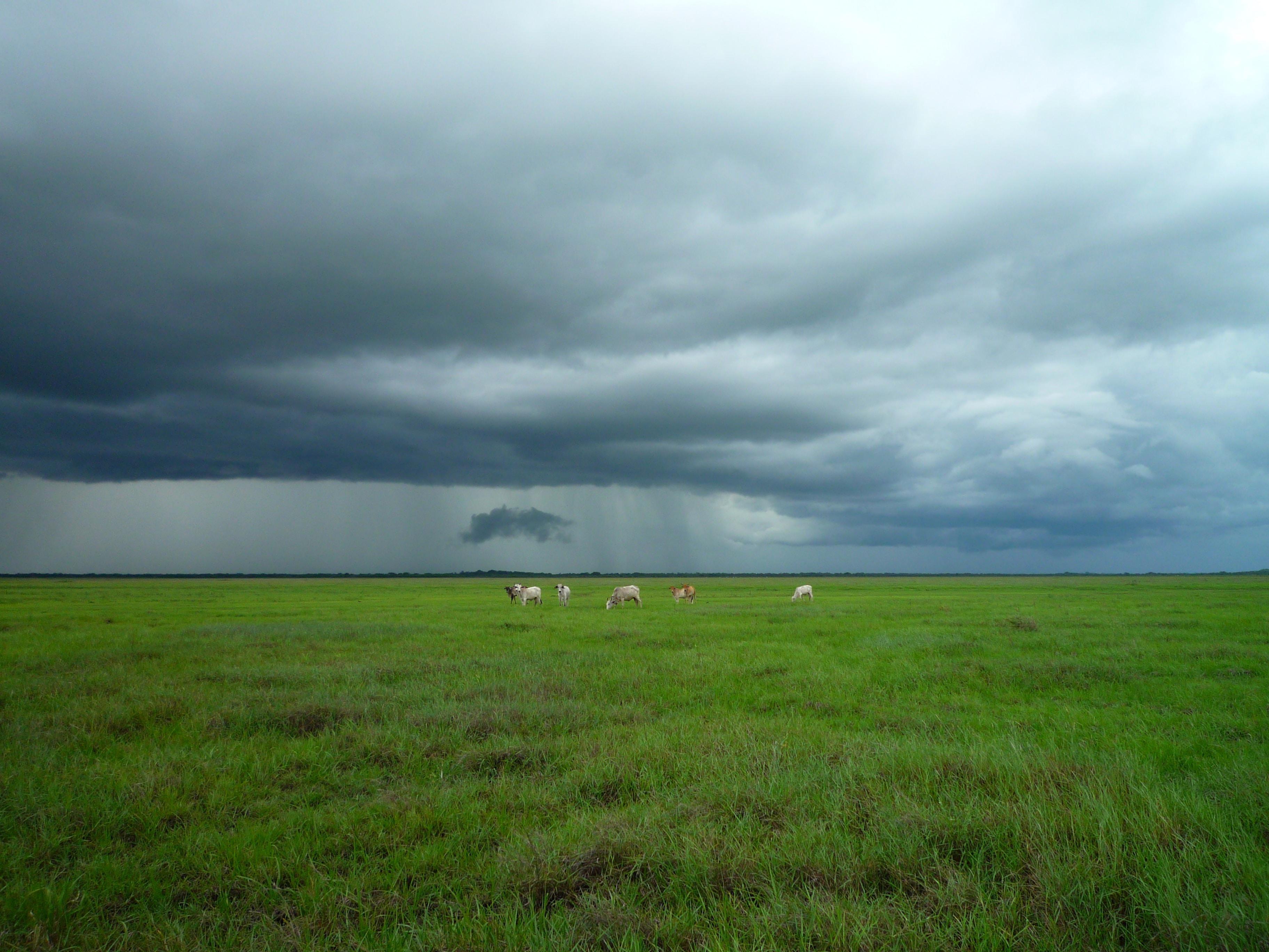 Soja: chuva em Mato Grosso e Bahia. Siga a previsão para novembro