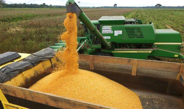 colheita do milho, grãos, segunda safra
