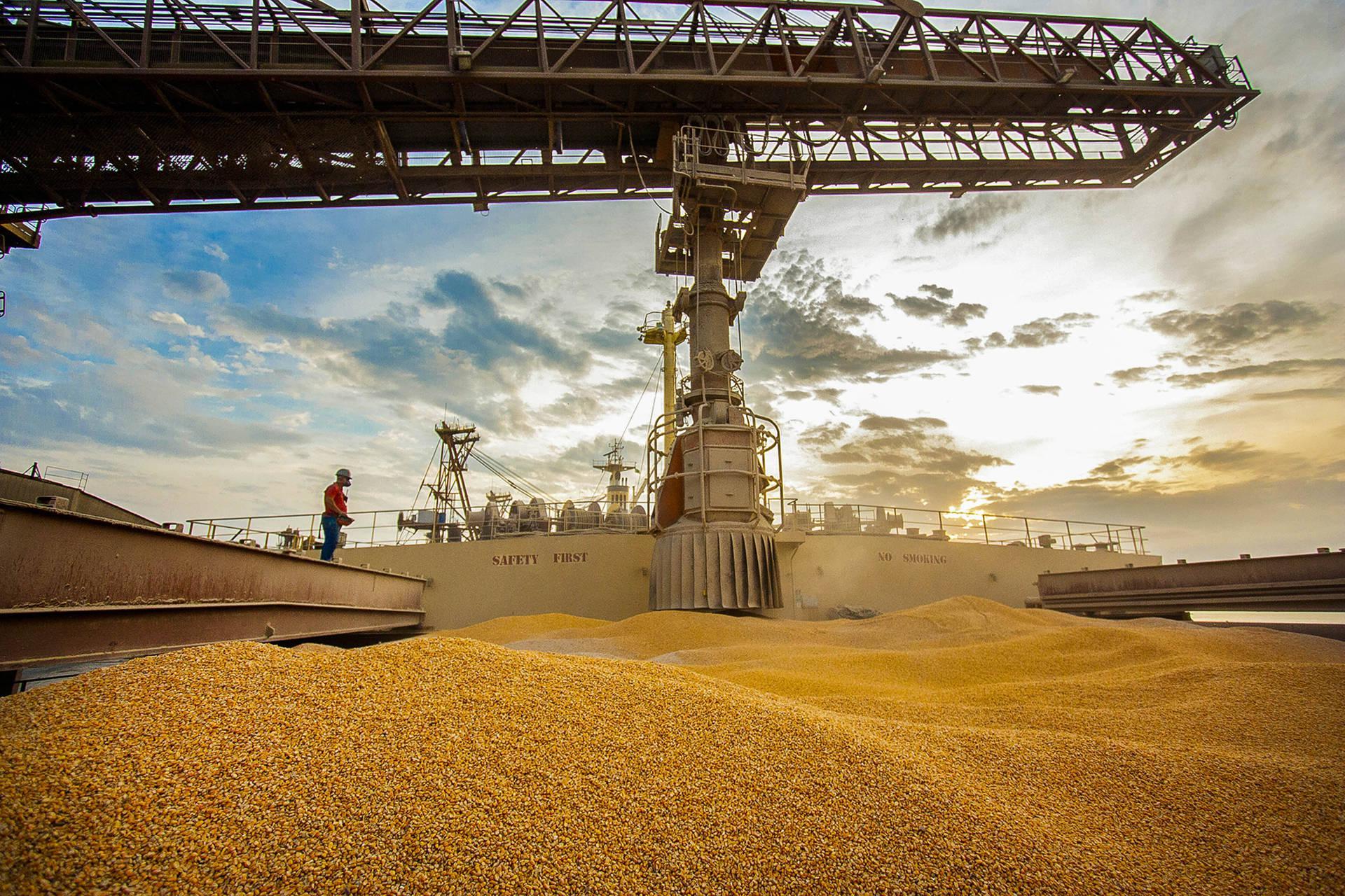 Brasil, maior exportador de milho do mundo, vai ter falta do grão ...