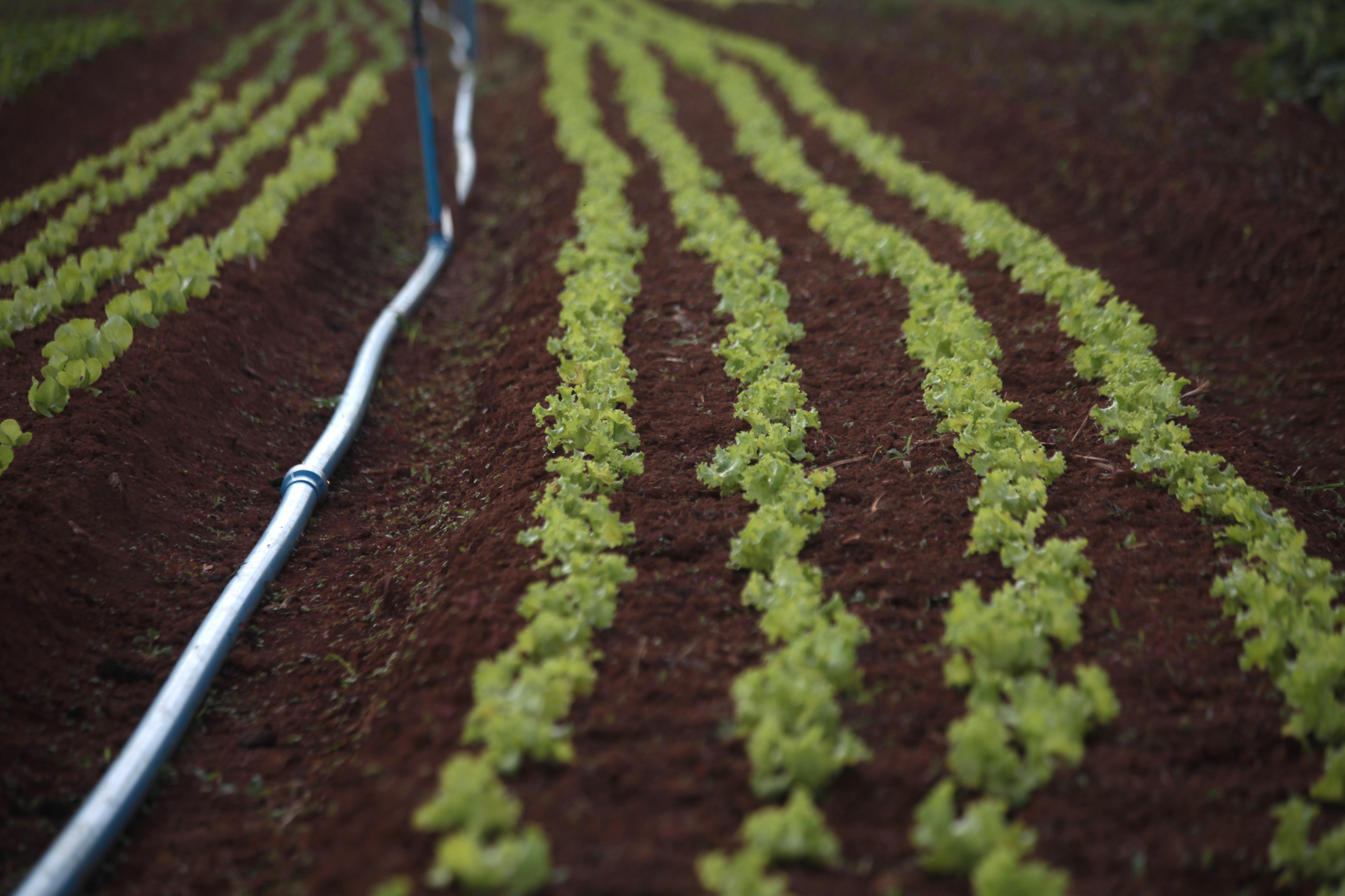 Defensivos com especificação de referência podem ser utilizados na agricultura orgânica. biológicos
