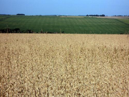 Bunge irá monitorar compras indiretas de soja no Cerrado
