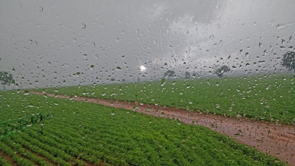 Soja: variação de chuva e tempo firme impulsionam plantio; confira a previsão