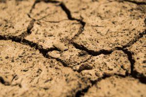 solo seca
