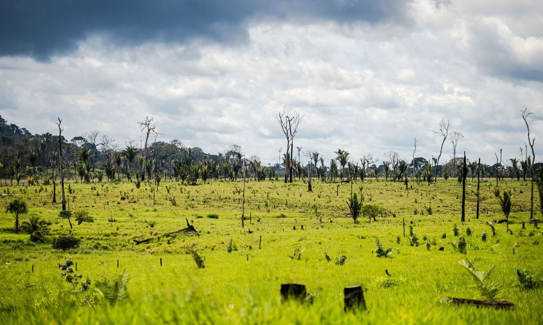 desmatamento, meio ambiente, aquecimento global
