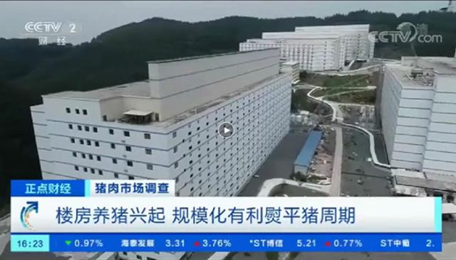 Fazenda vertical cria porcos dentro de prédios na China