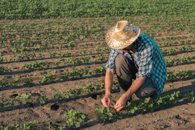 Agricultor agricultura familiar lavoura fazenda produtor