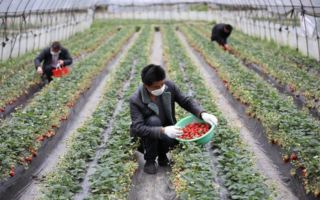 agricultura, coronavírus, campo, China