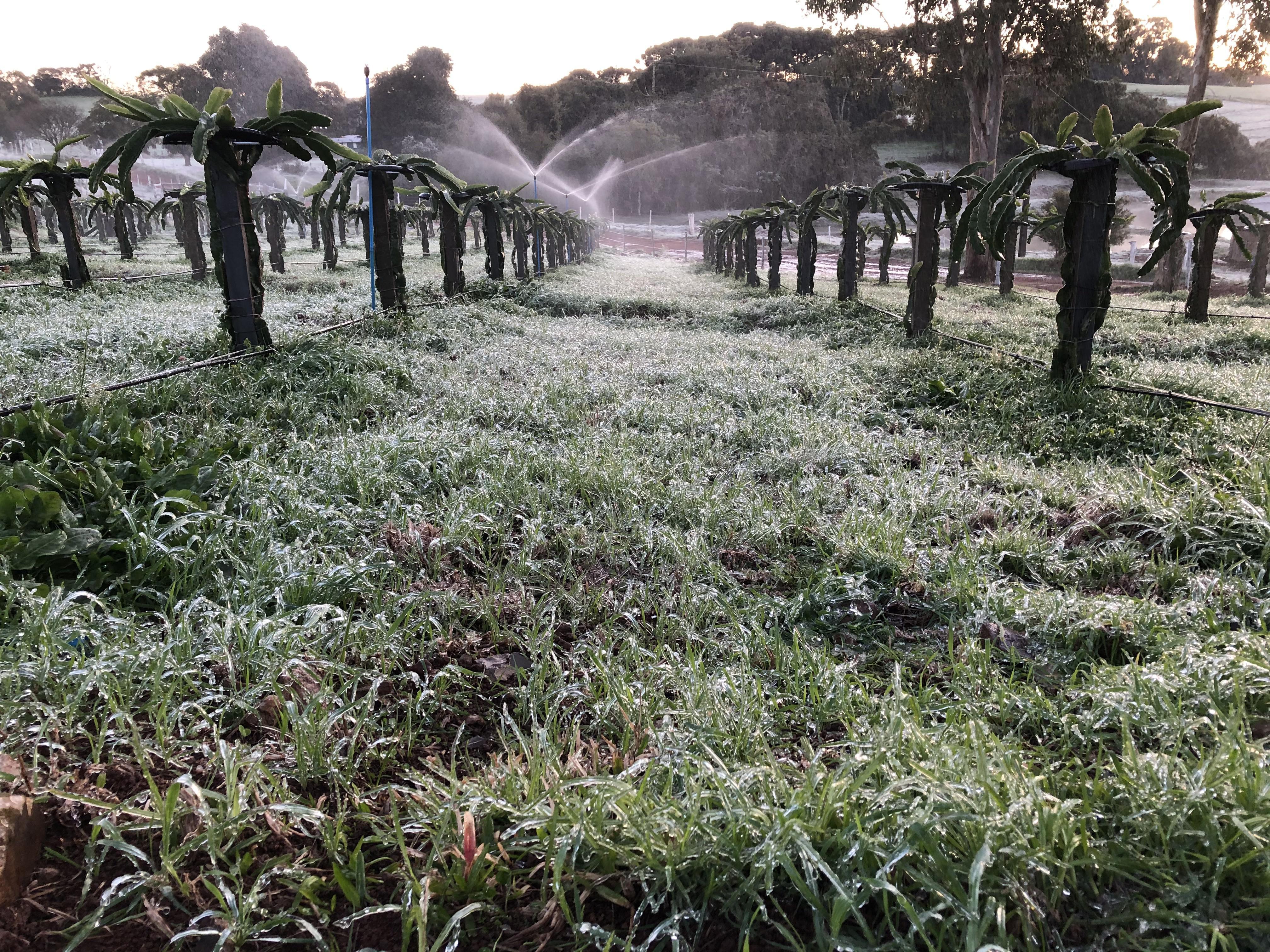 Irrigação lavoura geada