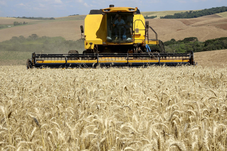 Trigo, lavoura, colheita