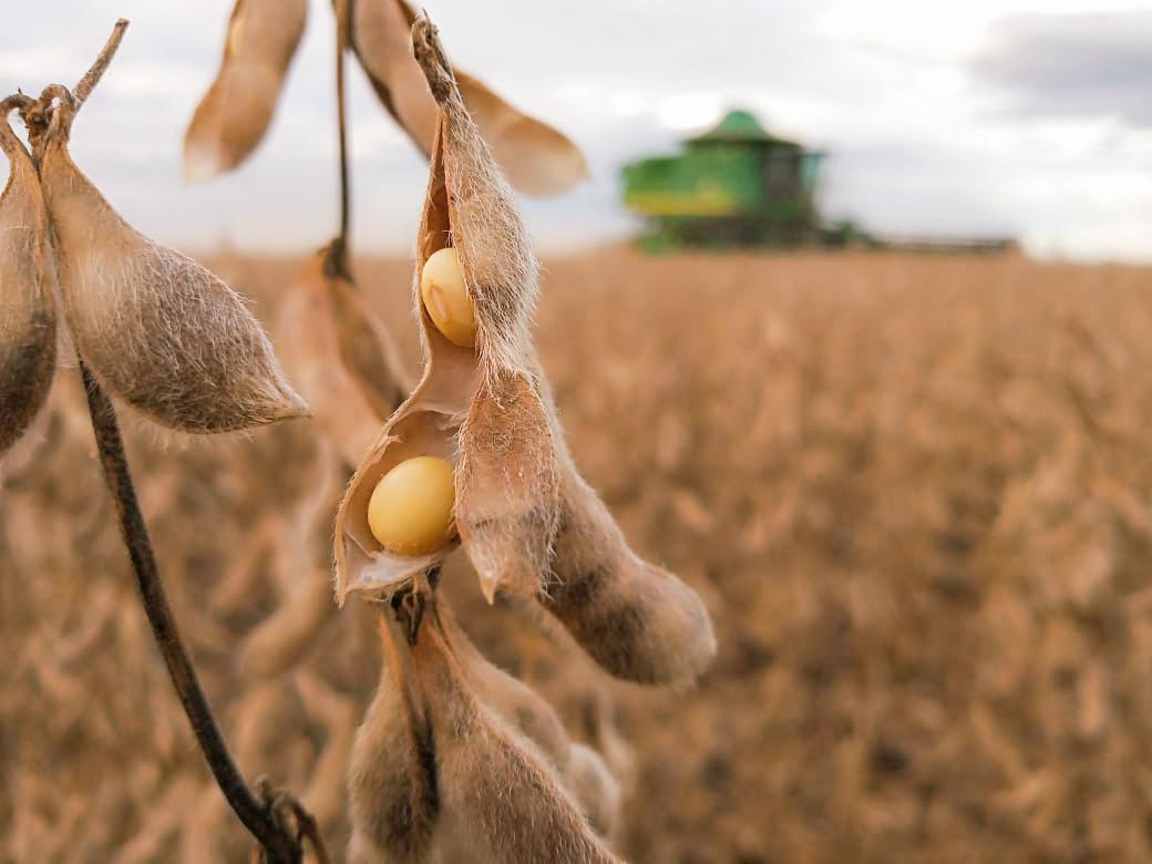 Veja o que deve mexer com o mercado da soja na próxima semana