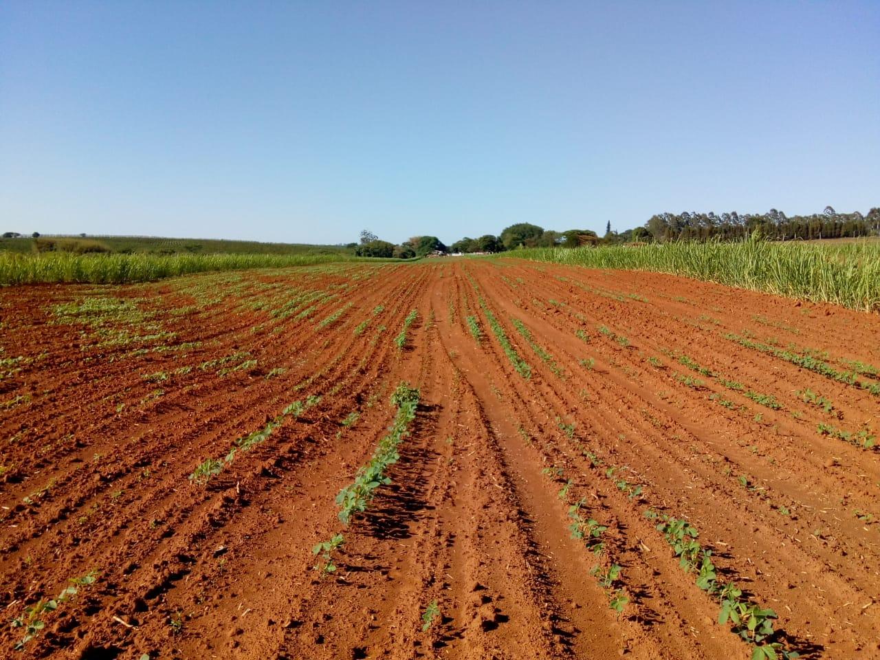 soja seca plantio estande produtividade