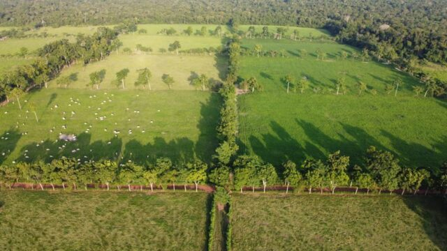 fazenda de mauro costa pecuária