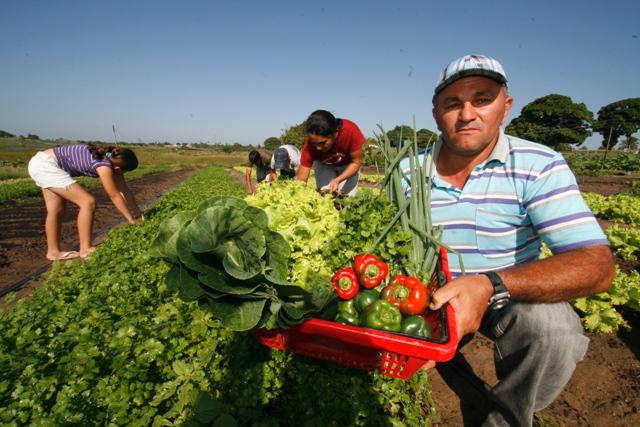 agricultura familiar, agricultor familiar, hortaliça, paa