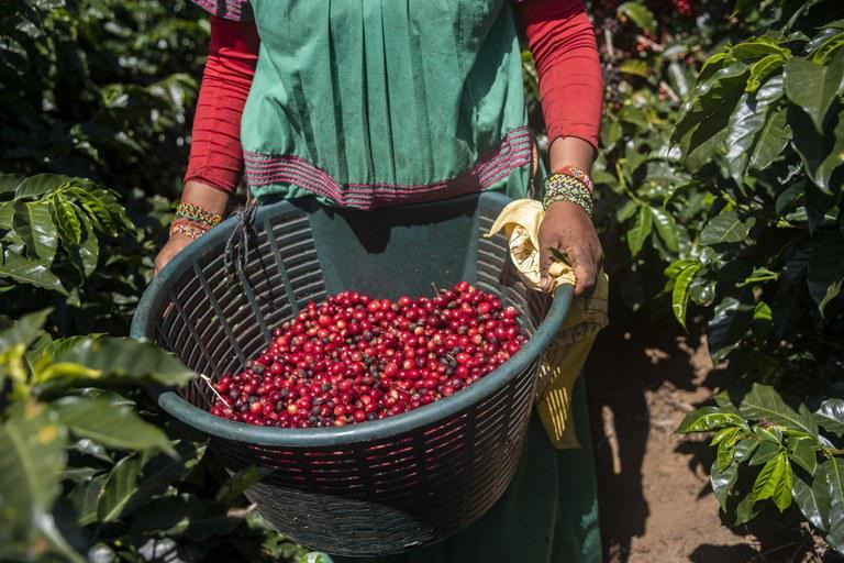 mulher produtora rural café
