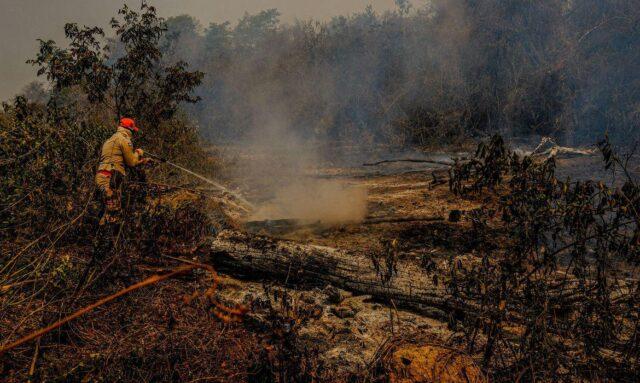 fogo pantanal mato grosso do sul incêndios