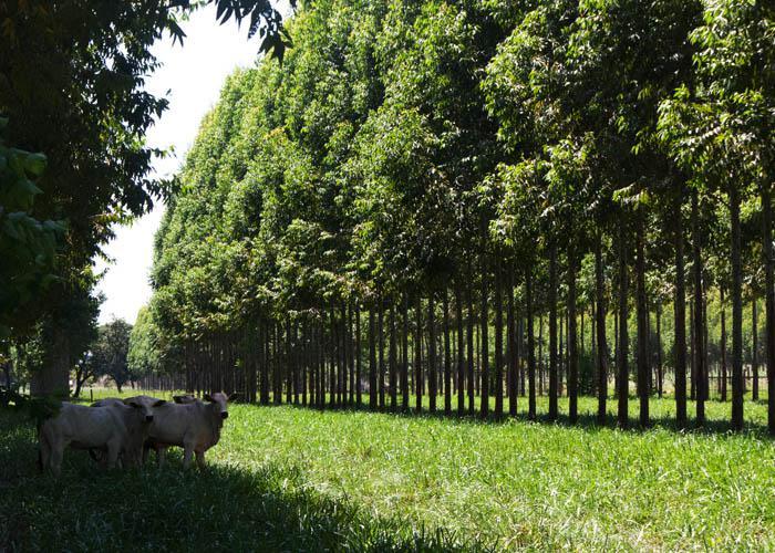 integração lavoura-pecuária-floresta
