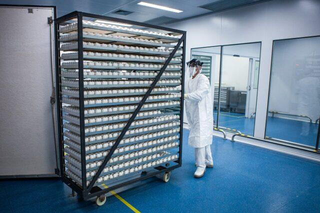 lote de ovos que são usados para fabricação da Butanvac