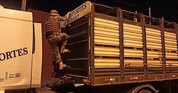 roubo de gado polícia militar