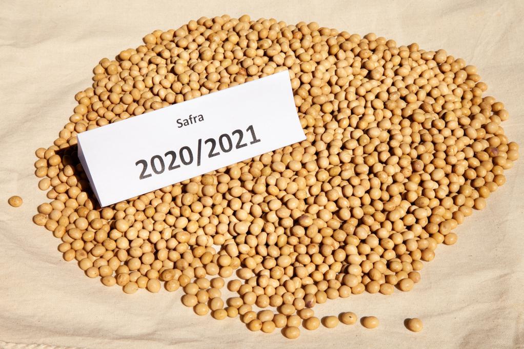 safra soja 2020/2021 grão