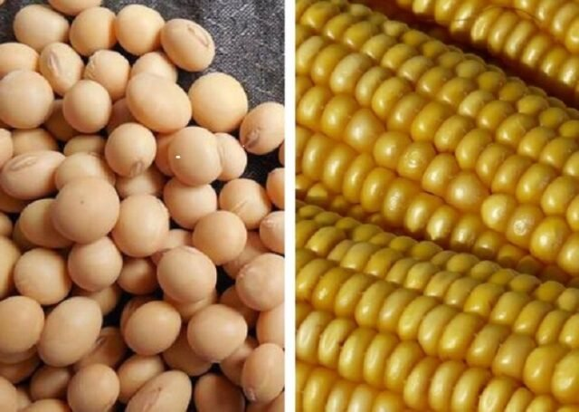 soy and corn, usda, grains
